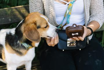 Trained intelligent dog taking food from human- Stock Photo or Stock Video of rcfotostock | RC-Photo-Stock