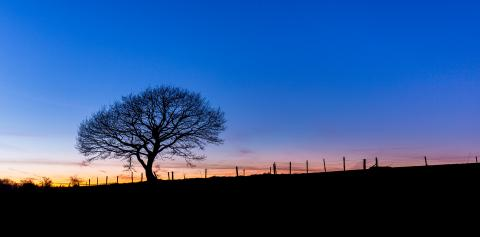 tree crown from a oak at sunset : Stock Photo or Stock Video Download rcfotostock photos, images and assets rcfotostock | RC-Photo-Stock.: