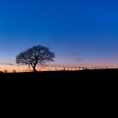 tree in a winter landscape at sunset- Stock Photo or Stock Video of rcfotostock | RC-Photo-Stock