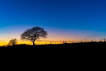 tree silhouette landscape at sunset : Stock Photo or Stock Video Download rcfotostock photos, images and assets rcfotostock | RC-Photo-Stock.:
