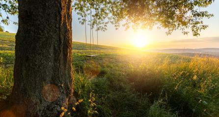 tree with empty swing at sunset- Stock Photo or Stock Video of rcfotostock | RC-Photo-Stock