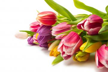 Tulip flower bouquet : Stock Photo or Stock Video Download rcfotostock photos, images and assets rcfotostock | RC-Photo-Stock.: