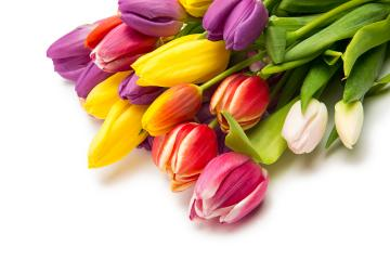 Tulip flowers bouquet- Stock Photo or Stock Video of rcfotostock | RC-Photo-Stock
