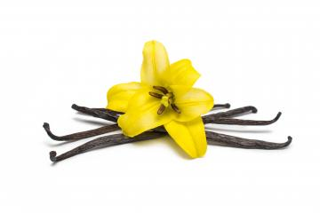 Vanilla Beans and Flower- Stock Photo or Stock Video of rcfotostock | RC-Photo-Stock