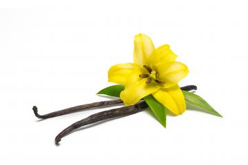 Vanilla pods and flower- Stock Photo or Stock Video of rcfotostock | RC-Photo-Stock