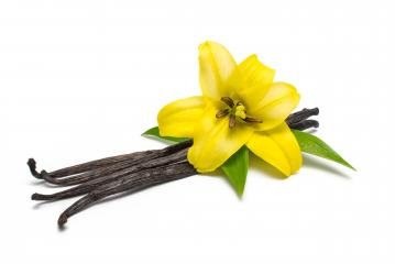 Vanilla pods and flower isolated on white background : Stock Photo or Stock Video Download rcfotostock photos, images and assets rcfotostock   RC-Photo-Stock.: