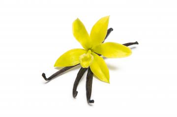 Vanilla pods and original orchid flower isolated on white- Stock Photo or Stock Video of rcfotostock | RC-Photo-Stock