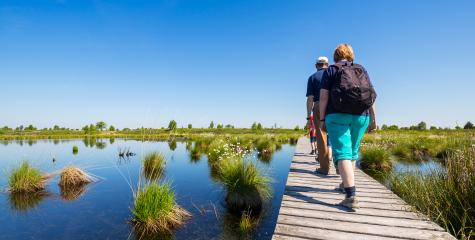 Walking tour in the High Fens (Hautes Fagnes)  : Stock Photo or Stock Video Download rcfotostock photos, images and assets rcfotostock | RC-Photo-Stock.: