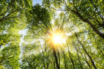 warm morning sun dramatically casting intense rays through the treetop- Stock Photo or Stock Video of rcfotostock | RC-Photo-Stock