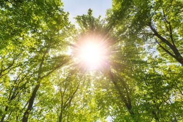Warm spring sun shines explosive through treetop : Stock Photo or Stock Video Download rcfotostock photos, images and assets rcfotostock | RC-Photo-Stock.: