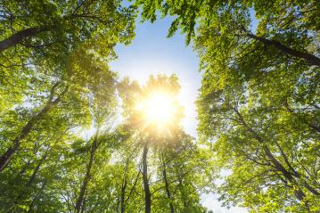 warm spring sun shining through a hole in a forest treetop- Stock Photo or Stock Video of rcfotostock | RC-Photo-Stock