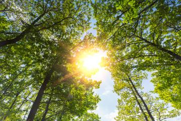 warm spring sun shining through the treetop- Stock Photo or Stock Video of rcfotostock | RC-Photo-Stock