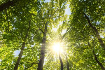 warm sun shining through the treetop in a spring forest- Stock Photo or Stock Video of rcfotostock | RC-Photo-Stock