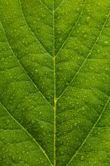 water drops on a leaf texture background- Stock Photo or Stock Video of rcfotostock | RC-Photo-Stock