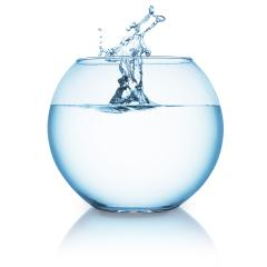 water splash in a fishbowl- Stock Photo or Stock Video of rcfotostock | RC-Photo-Stock