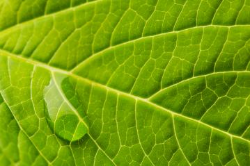 waterdrop running down a leaf : Stock Photo or Stock Video Download rcfotostock photos, images and assets rcfotostock | RC-Photo-Stock.: