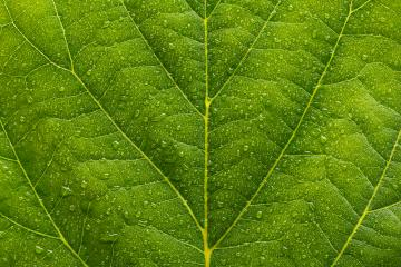 waterdrops on a green leaf- Stock Photo or Stock Video of rcfotostock | RC-Photo-Stock