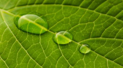 waterdrops on a leaf : Stock Photo or Stock Video Download rcfotostock photos, images and assets rcfotostock | RC-Photo-Stock.: