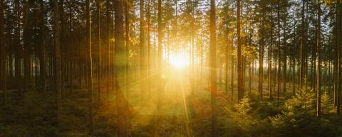 way in to the Forest panorama with sunsetlight - aerial drone shot- Stock Photo or Stock Video of rcfotostock | RC-Photo-Stock