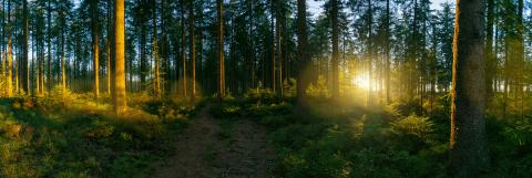 way in to the Forest panorama with sunsetlight- Stock Photo or Stock Video of rcfotostock | RC-Photo-Stock