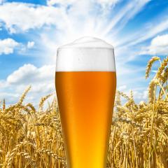 Weizen bier mit tau tropfen- Stock Photo or Stock Video of rcfotostock | RC-Photo-Stock