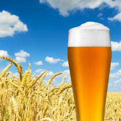 wheat beer with dew drops- Stock Photo or Stock Video of rcfotostock | RC-Photo-Stock