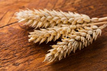 wheat ears- Stock Photo or Stock Video of rcfotostock | RC-Photo-Stock