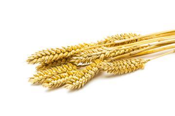 Wheat ears- Stock Photo or Stock Video of rcfotostock | RC-Photo-Stock