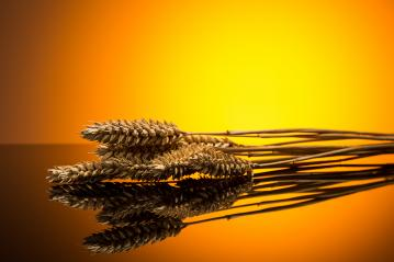 Wheat ears : Stock Photo or Stock Video Download rcfotostock photos, images and assets rcfotostock | RC-Photo-Stock.: