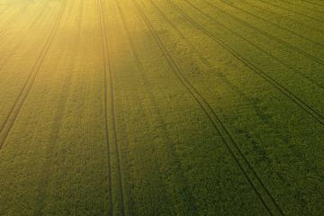 Wheat field landscape at sunset. Aerial view drone shot- Stock Photo or Stock Video of rcfotostock | RC-Photo-Stock