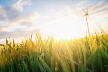 Wheat flied at sunset with clouds and wind turbine, agriculture concept image- Stock Photo or Stock Video of rcfotostock   RC-Photo-Stock