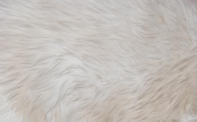 White long hair fur for background or texture- Stock Photo or Stock Video of rcfotostock | RC-Photo-Stock