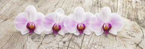 White orchids (phalaenopsis flower) on wooden background : Stock Photo or Stock Video Download rcfotostock photos, images and assets rcfotostock | RC-Photo-Stock.:
