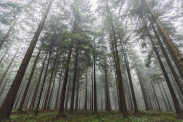 wilderness landscape forest with pine trees and mist- Stock Photo or Stock Video of rcfotostock | RC-Photo-Stock