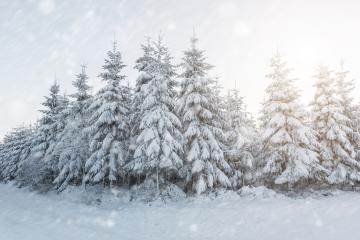 winter forest at a snwoy winter landscape : Stock Photo or Stock Video Download rcfotostock photos, images and assets rcfotostock | RC-Photo-Stock.: