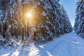 winter forest trail with sunlight that shines between the forest trees : Stock Photo or Stock Video Download rcfotostock photos, images and assets rcfotostock | RC-Photo-Stock.: