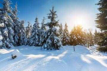 winter landscape : Stock Photo or Stock Video Download rcfotostock photos, images and assets rcfotostock | RC-Photo-Stock.: