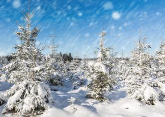winter landscape with Christmas trees and blue sky : Stock Photo or Stock Video Download rcfotostock photos, images and assets rcfotostock | RC-Photo-Stock.: