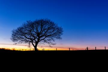 winter sunset with a oak tree silhouette- Stock Photo or Stock Video of rcfotostock | RC-Photo-Stock