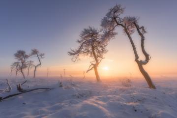 Winterliche Bäume im Schnee bei Sonnenaufgang, Hohes Venn, Eifel, Belgien : Stock Photo or Stock Video Download rcfotostock photos, images and assets rcfotostock | RC-Photo-Stock.:
