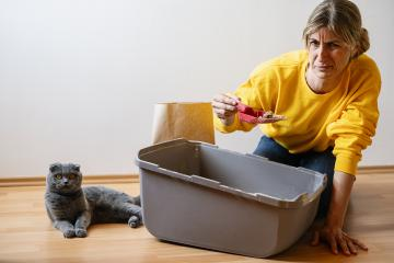 Woman cleaning the little box or cat toilet and a Cute scottish fold cat lying on the ground, feeling stinky, with copyspace for your individual text. : Stock Photo or Stock Video Download rcfotostock photos, images and assets rcfotostock | RC-Photo-Stock.: