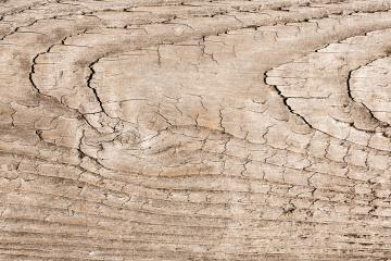 wood structure background texture- Stock Photo or Stock Video of rcfotostock | RC-Photo-Stock