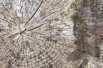 Wood tree texture pattern with year rings- Stock Photo or Stock Video of rcfotostock | RC-Photo-Stock