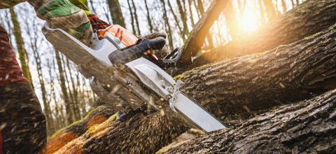 Woodcutter saws tree with chainsaw on sawmill- Stock Photo or Stock Video of rcfotostock | RC-Photo-Stock