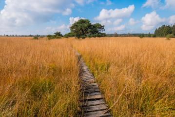 Wooden boardwalk at the High Fens moor at autumn, Belgium, Hohes Venn : Stock Photo or Stock Video Download rcfotostock photos, images and assets rcfotostock | RC-Photo-Stock.: