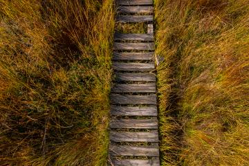 Wooden boardwalk at the High Fens view from above, Belgium, Hohes Venn- Stock Photo or Stock Video of rcfotostock | RC-Photo-Stock