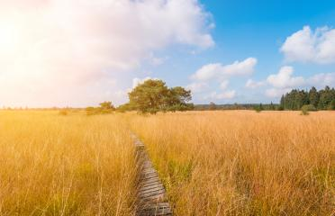 Wooden boardwalk to a bog pine at the High Fens moor at autumn, Belgium, Hohes Venn- Stock Photo or Stock Video of rcfotostock | RC-Photo-Stock