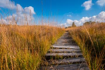 wooden boardwalk to the High Fens bog landscape at autumn, Belgium, Hohes Venn- Stock Photo or Stock Video of rcfotostock | RC-Photo-Stock