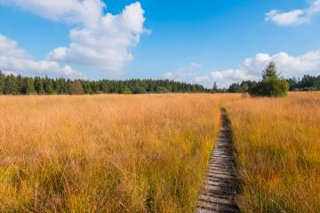 Wooden hiking trail at the High Fens moor at autumn, Belgium, Hohes Venn : Stock Photo or Stock Video Download rcfotostock photos, images and assets rcfotostock | RC-Photo-Stock.: