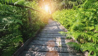 Wooden path in to the forest covered ferns and sunlight, at summer evening - Stock Photo or Stock Video of rcfotostock | RC-Photo-Stock